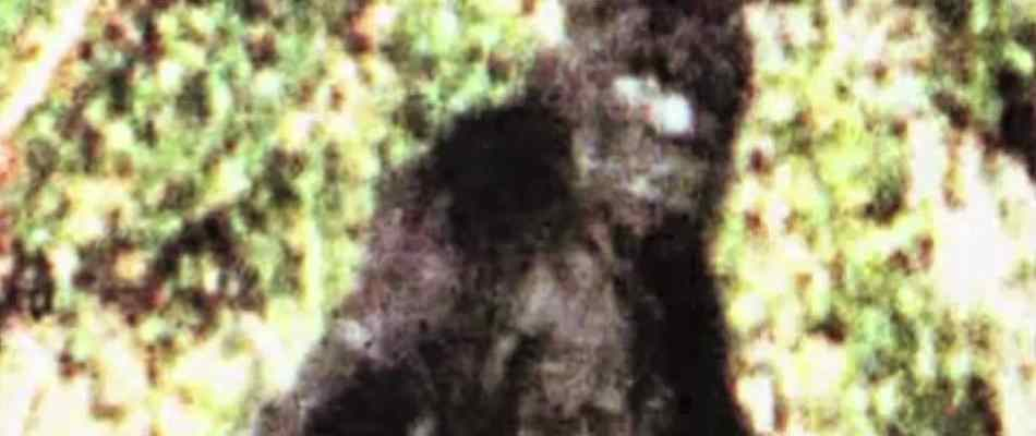The Truth Behind: Bigfoot, documentary from 2009.