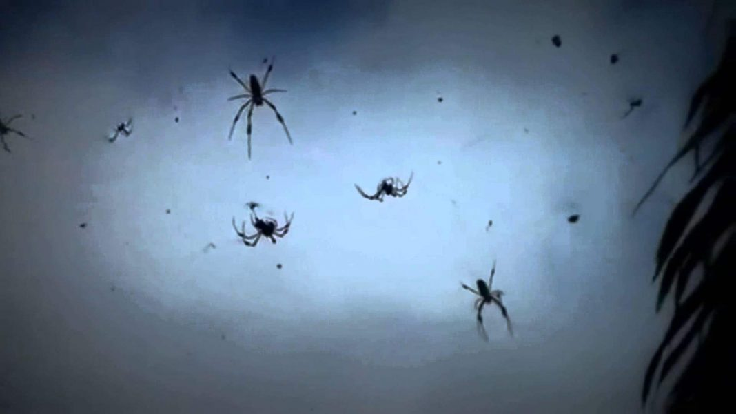 baby spiders fall from sky in the Australia.